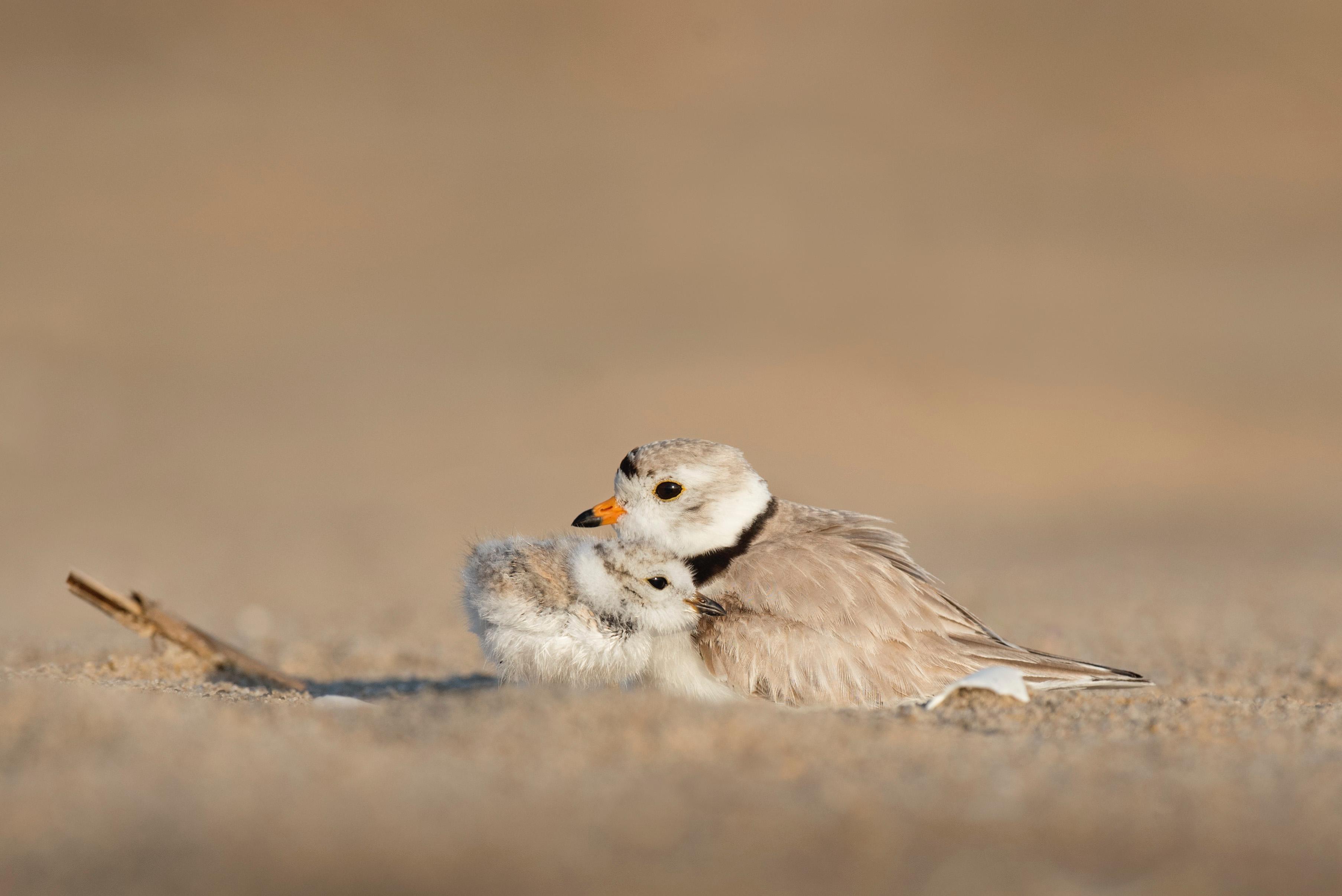 Une maman oiseau avec son bébé oiseau